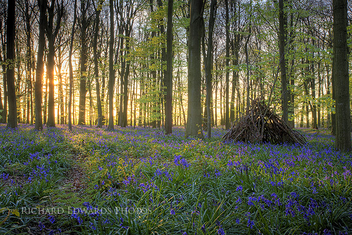 Bluebell Camp