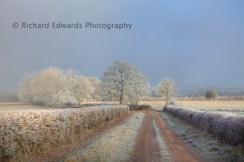Frosted Winter Scene