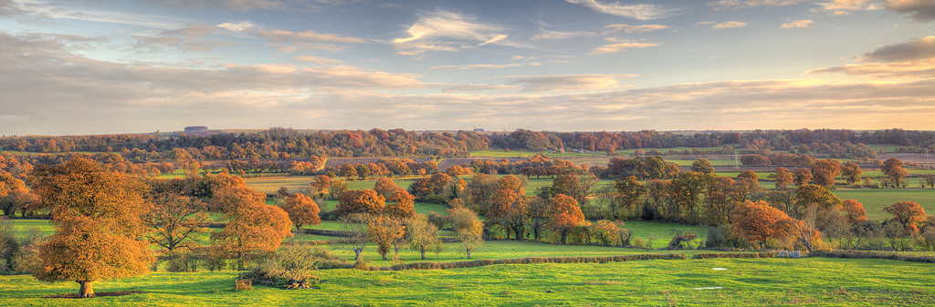 Autumn Trees, near Potterne