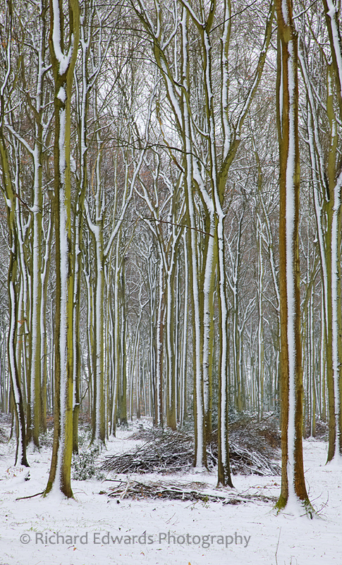 Snowy Oakfrith Woods