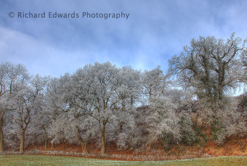 Frosted Tree Line