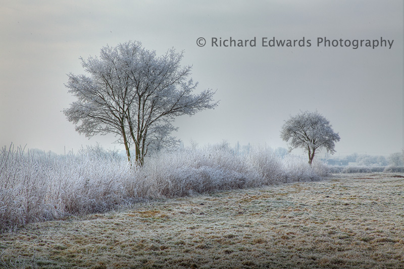 Two Frosted Trees