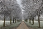 Frosted Tree Avenue